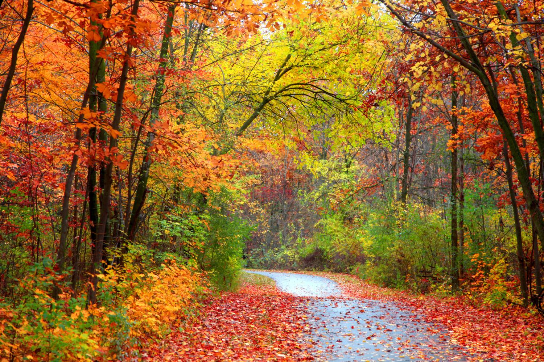 Fall foliage on a colorful autumn road