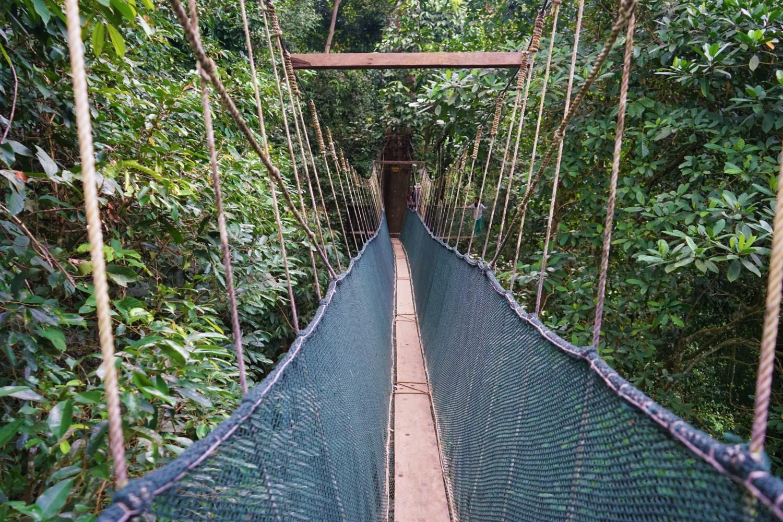 Kinabalu canopy bridge, Malaysia