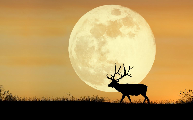 Elk silhouetted against full moon